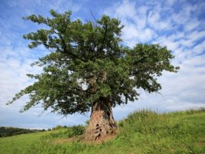 Дърво с корен 2011