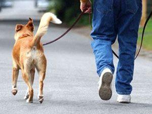 Край на разходките на кучета в училищните дворове
