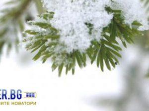 Честита Коледа и успешна нова 2012 г!