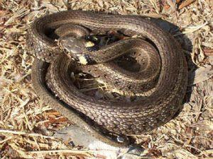Скандално! Змия ухапа второкласник докато е на училище